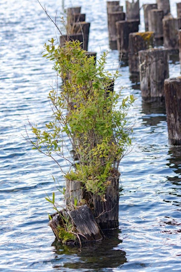 有老船坞打桩的湖 库存照片