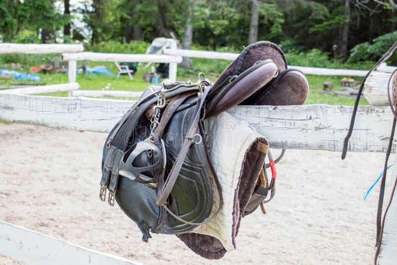 有肚带、马镫和骑马手套的使用的黑驯马马骑术马鞍 免版税库存图片