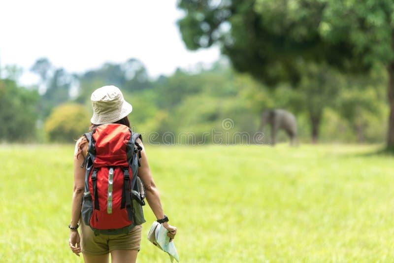有背包冒险发现方向和看见大象的藏品地图的妇女徒步旅行者或旅客在室外密林的森林里为e 免版税库存图片