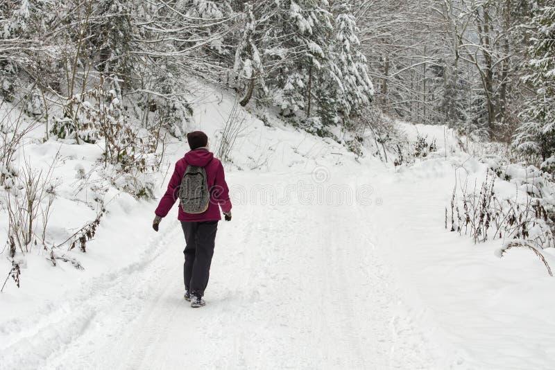 有背包的女孩走沿路的在一个多雪的森林冬日 图库摄影
