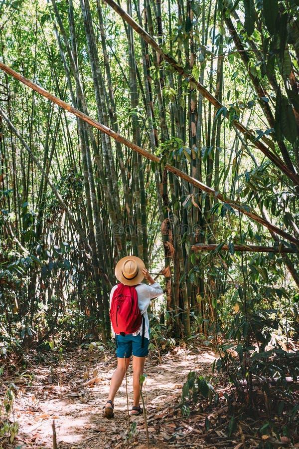 有背包的妇女在艰苦跋涉通过停止的密林看起来竹森林顶面分支 库存图片