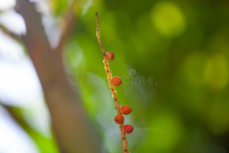 有自然光的软的高峰唇膏棕榈 免版税库存照片