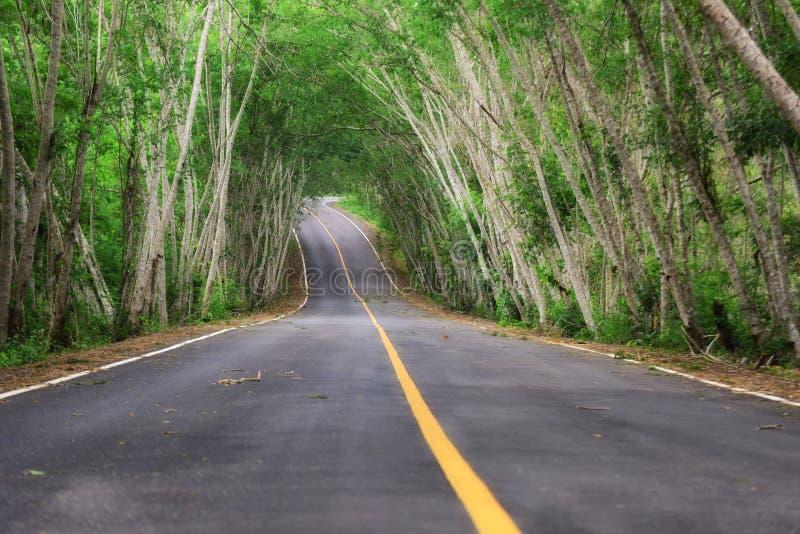 有自然树隧道的柏油路 库存图片
