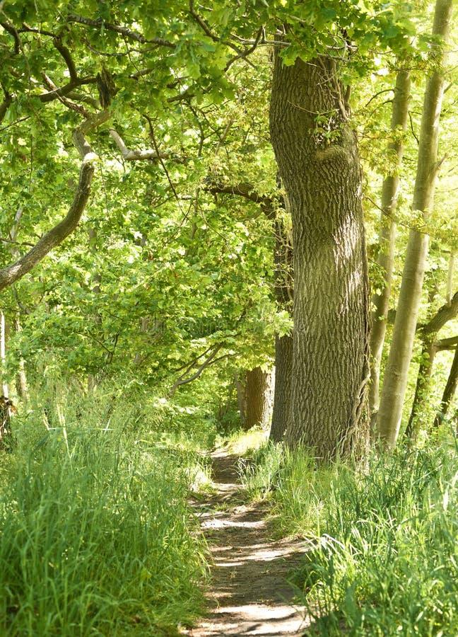 有自然步的田园诗森林道路 免版税库存图片
