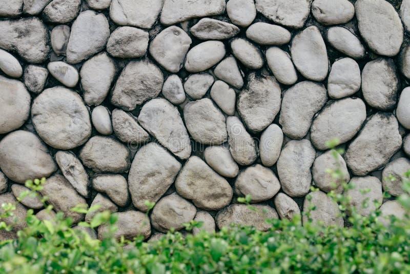 有自然纹理圆的石头的灰色或灰色石墙与在前面的低灌木 自然石老牌墙壁 库存照片