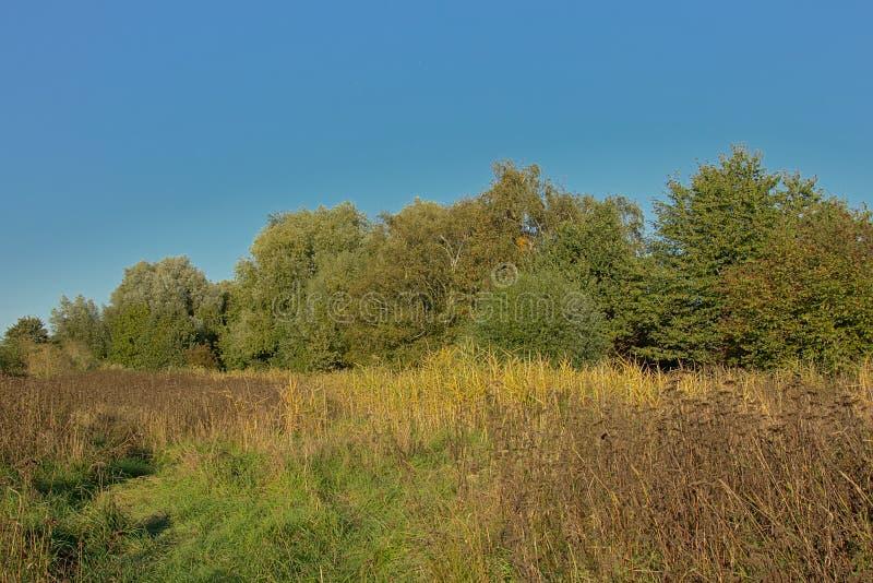 有芦苇、树和灌木的绿色草甸在一多云的秋天颜色在佛兰芒乡下 免版税库存照片