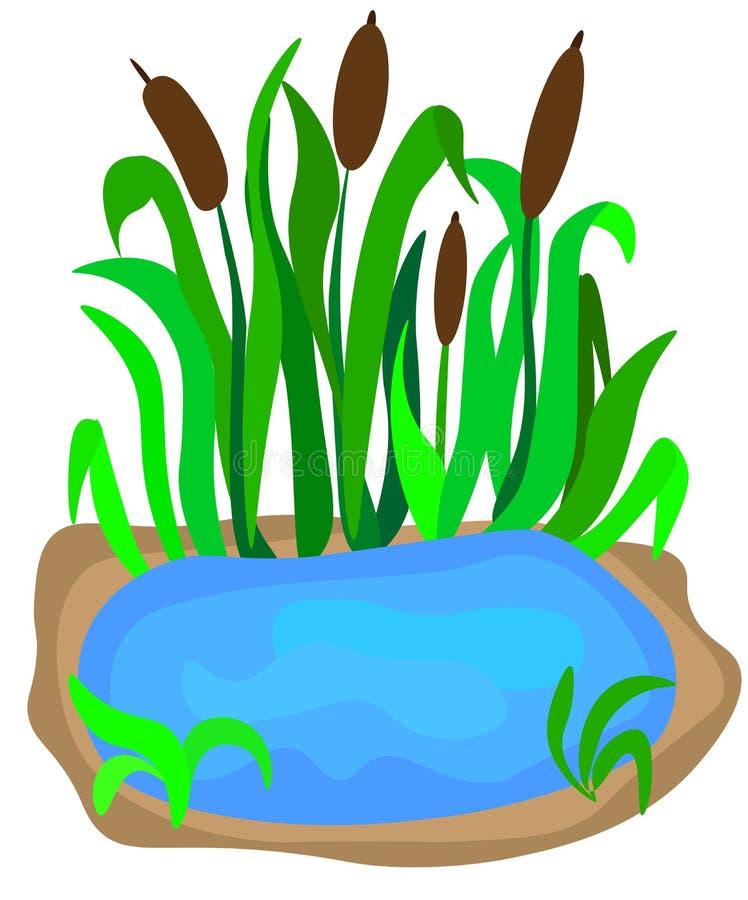 有芦苇的小湖在白色背景风景设计的岸隔绝的 动画片传染媒介特写镜头例证 皇族释放例证