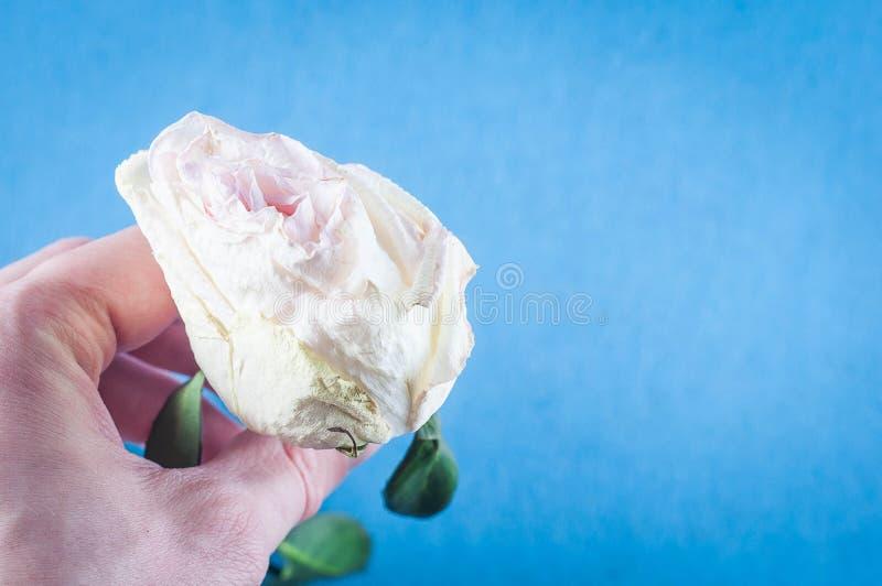 有芬芳花的美丽的植物如室内 免版税库存图片