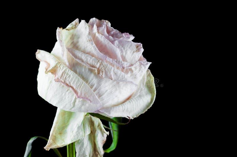 有芬芳花的美丽的植物如室内 库存图片