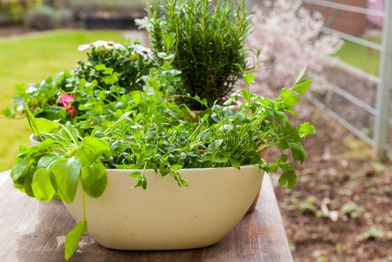 有花和草本的植物在庭院里 免版税库存照片