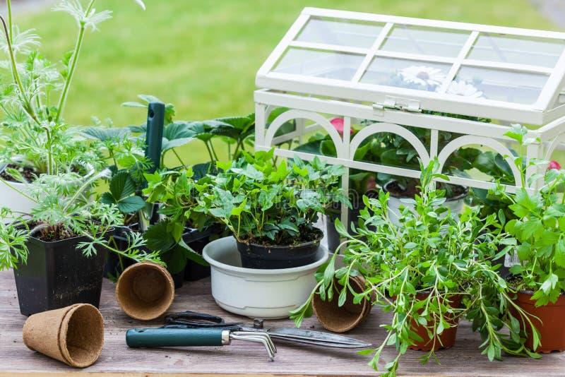有花和草本的植物在庭院里 库存图片