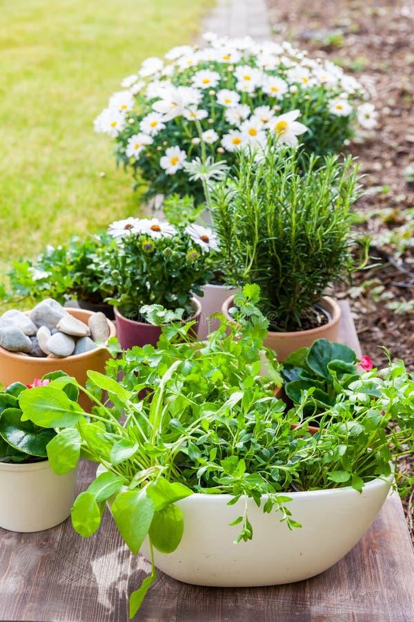有花和草本的植物在庭院里 免版税库存图片