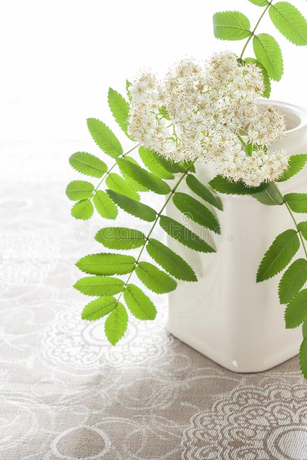 有花揪白色开花的分支的白色陶瓷罐在亚麻布的仿造了桌布 免版税库存图片