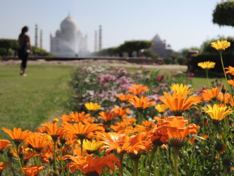 从有花的一个庭院看见的雾的泰姬陵 库存图片