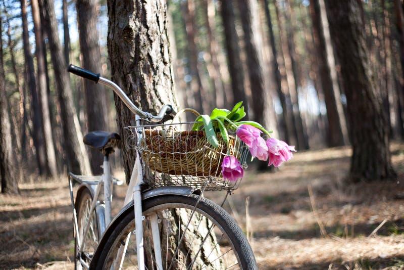有花的在篮子,森林老自行车 库存照片