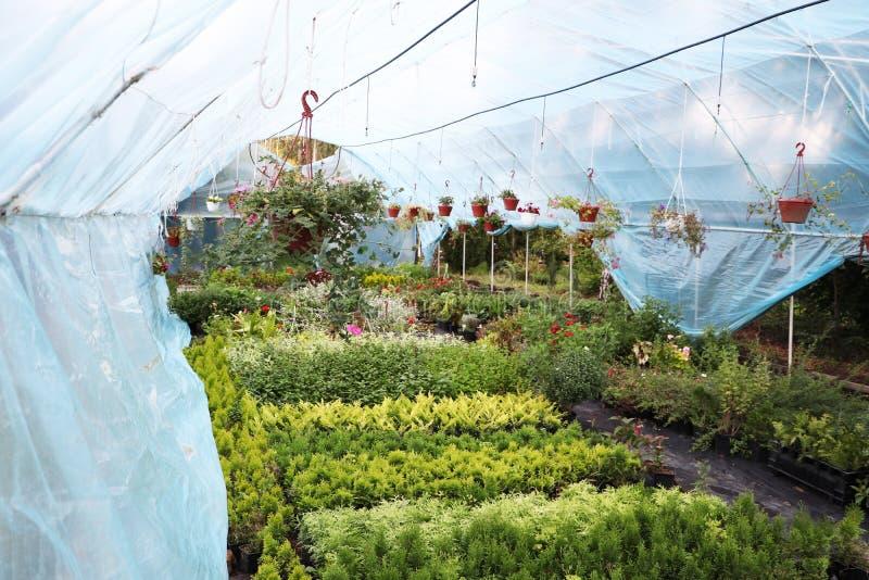有花的大温室 美丽的花 免版税图库摄影