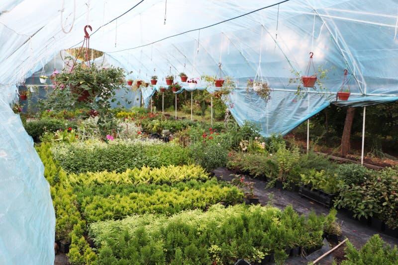 有花的大温室 美丽的花 免版税库存图片