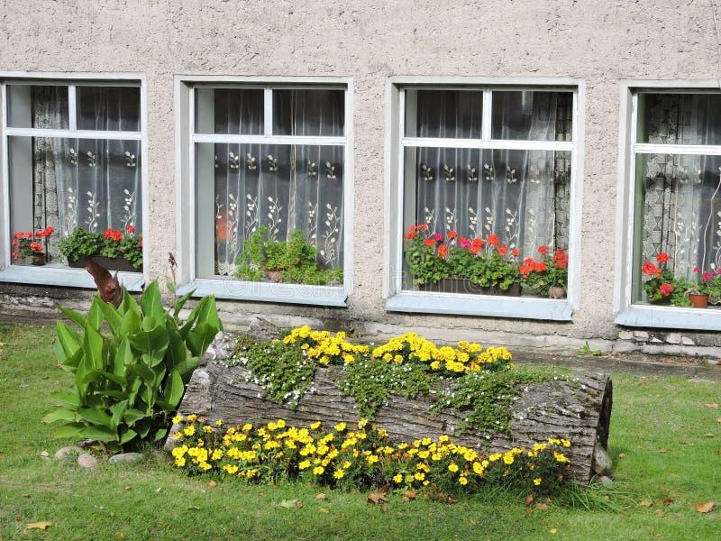 有花的树干花瓶临近房子 图库摄影