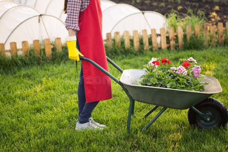 有花的花匠在独轮车 免版税库存图片