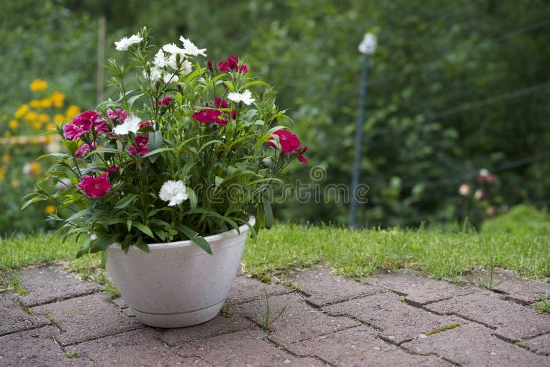有花的花盆在石露台 库存图片