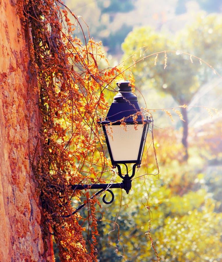 有花的街道灯笼 免版税库存照片