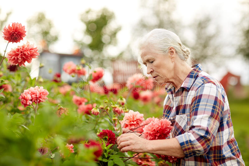 有花的资深妇女在夏天庭院 库存图片