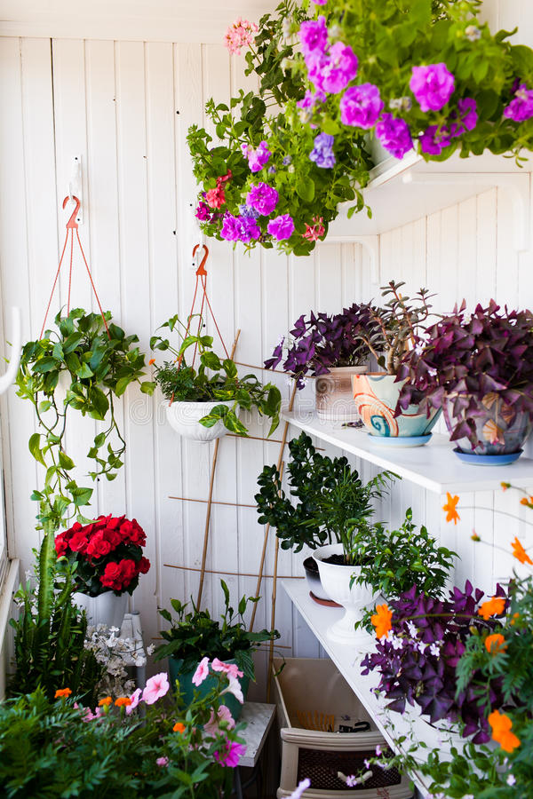 有花的阳台 库存照片