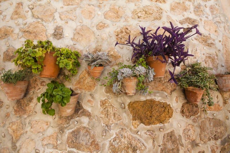 有花的陶瓷罐在一个石墙, Valldemossa,马略卡,西班牙上 库存图片