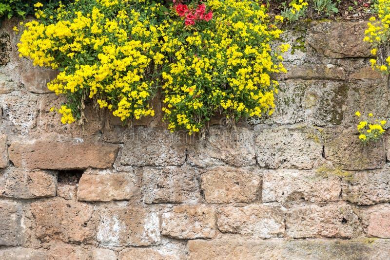 有花的风景中世纪城堡墙壁 库存图片