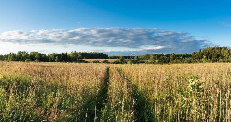 有草和野花和乡下公路全景lan的草甸 免版税库存图片