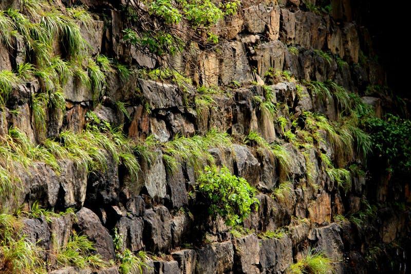 有草的湿岩石块墙壁 库存图片