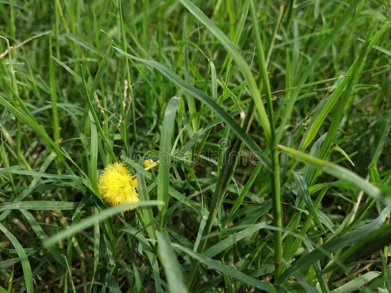 有草的绿叶 库存图片