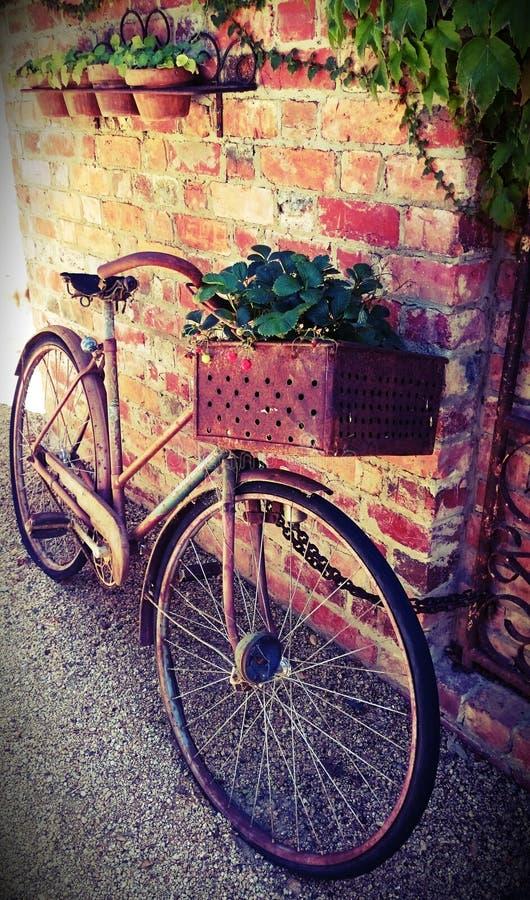 有草莓篮子的土气自行车  免版税图库摄影