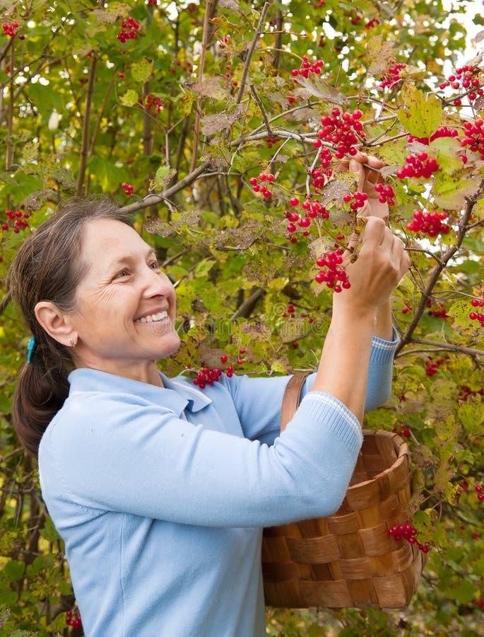 有荚莲属的植物的妇女 免版税库存照片