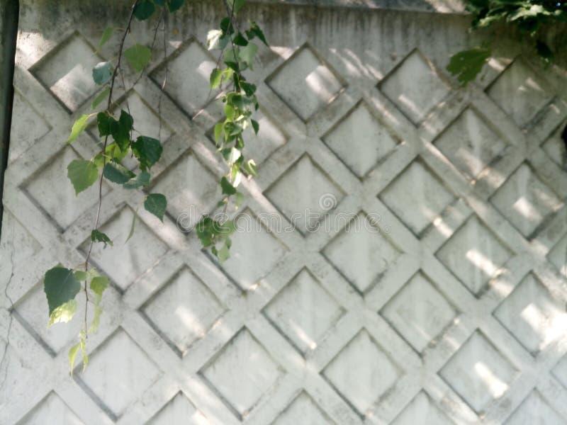 有菱形几何样式和桦树分支的灰色混凝土墙 库存图片