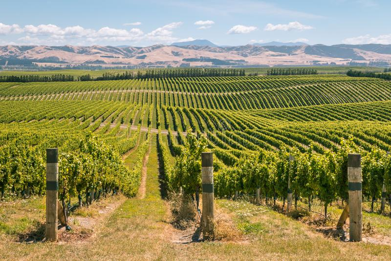有葡萄园的绵延山在Marlborough地区,新西兰 免版税库存图片
