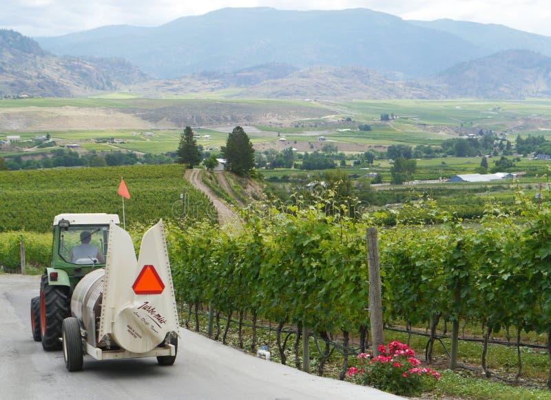 有葡萄园背景的葡萄园工作者在Osoyoos地区BC 免版税库存照片