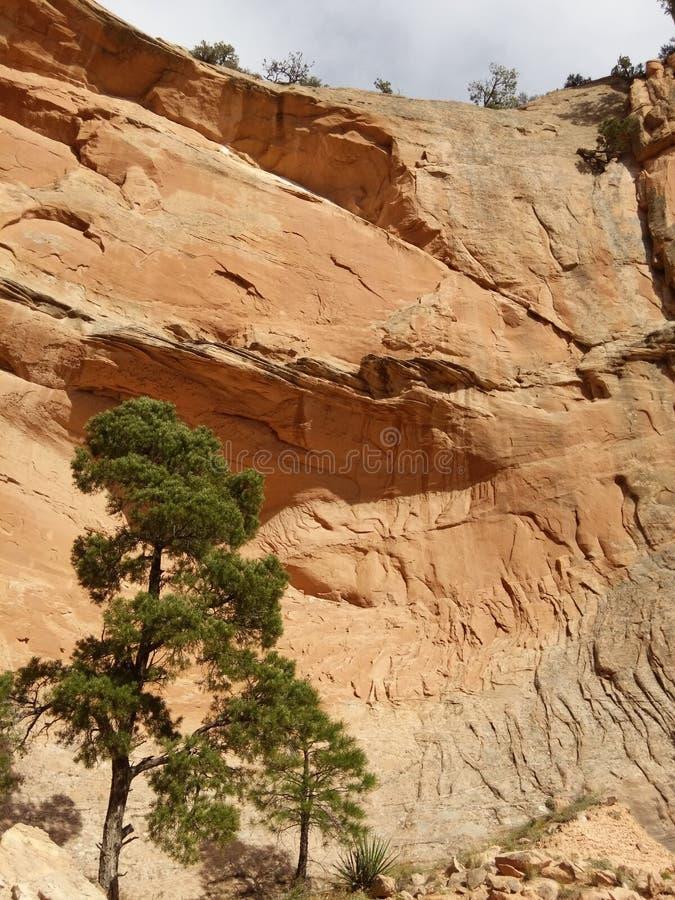有蓝天的红色岩石墙壁 窗口岩石足迹,亚利桑那 免版税库存照片