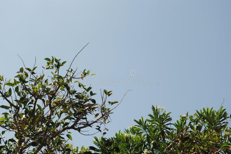 有蓝天的美丽的叶子 免版税库存照片