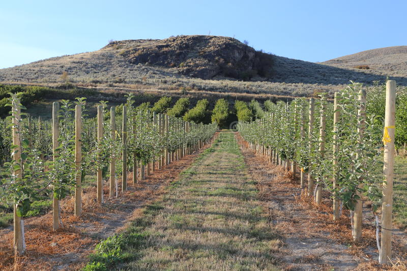 有蓝天的美丽的苹果树在秋天 免版税库存照片