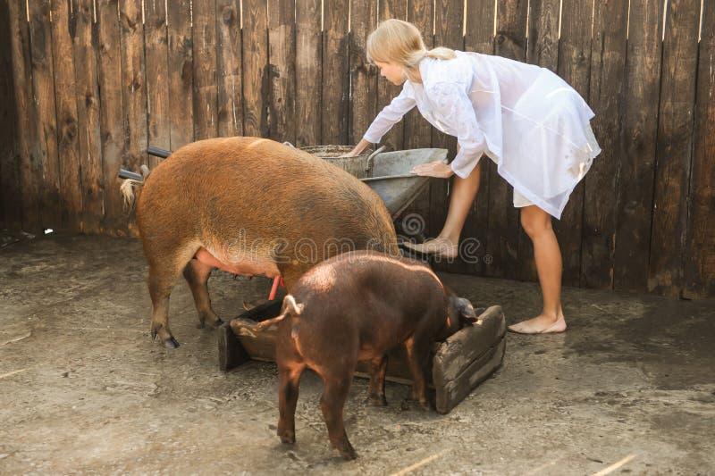 有蓝眼睛的白种人金发碧眼的女人在养猪场工作作为兽医 在夏天,女孩不佩带穿衣并且来 库存照片