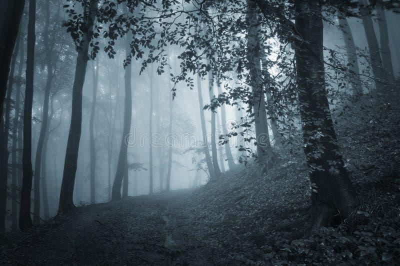 有蓝色雾的黑暗的森林在万圣夜晚上图片