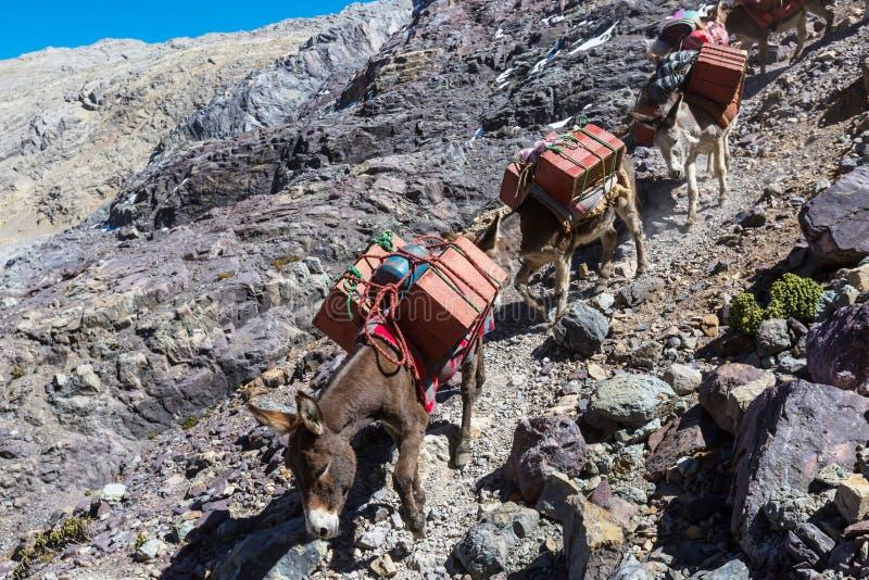 有蓬卡车在山脉 库存图片
