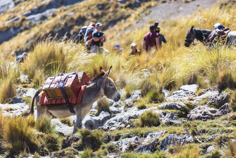 有蓬卡车在山脉 免版税库存照片