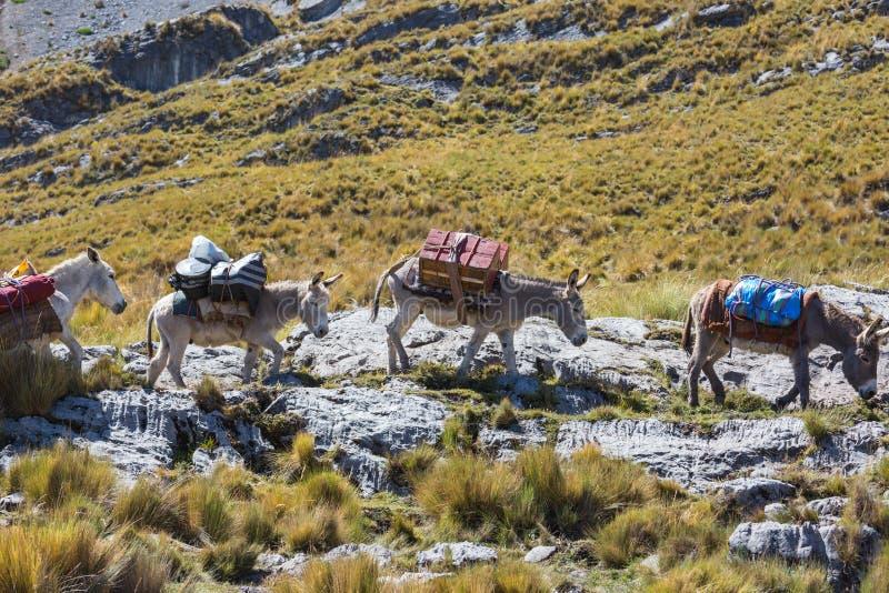 有蓬卡车在山脉 免版税库存图片
