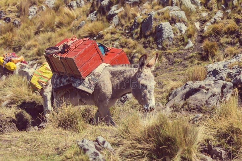 有蓬卡车在山脉 库存照片