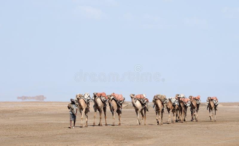 有蓬卡车埃赛俄比亚的盐 库存图片