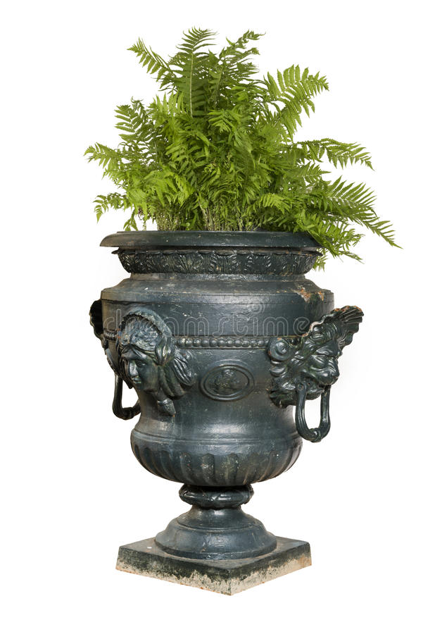 有蕨植物的大被绘的蓝色铁庭院缸 库存图片