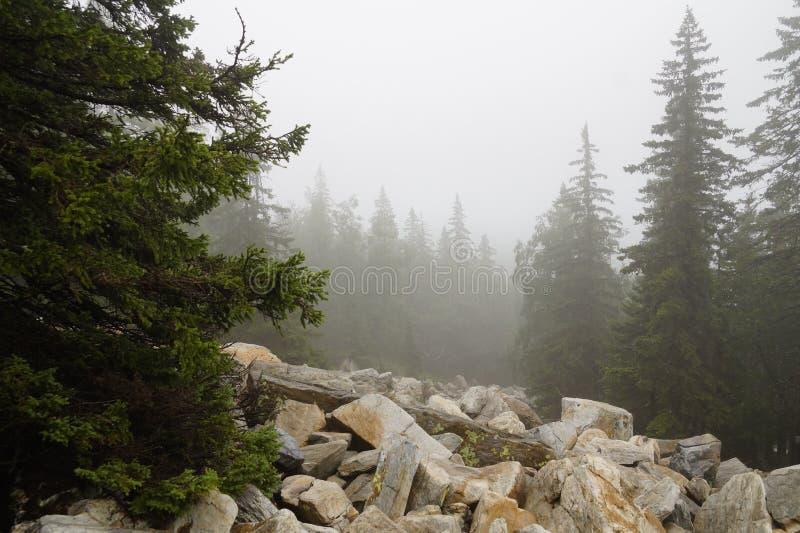 有薄雾和神奇森林山'Zyuratkul '乌拉尔 ?? 免版税库存图片