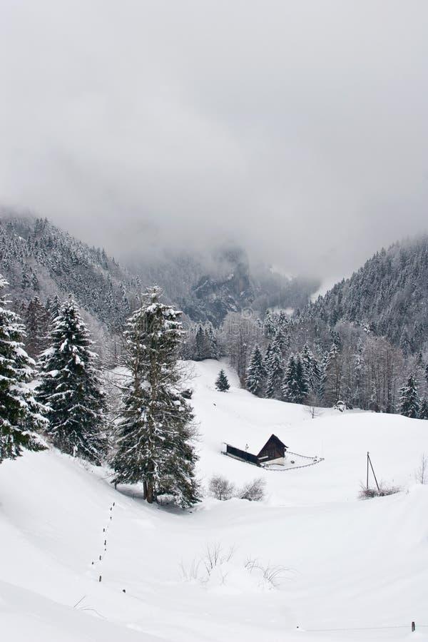 有薄雾的场面冬天 免版税库存图片